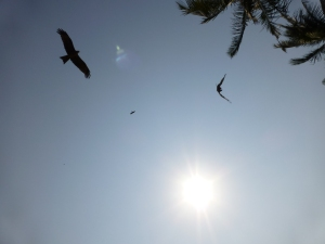 Typical beach view - birds of prey biding their time