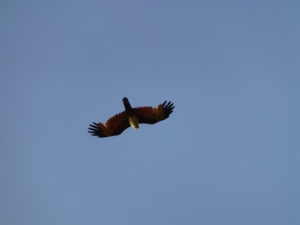 I believe this one is a sea eagle, I didn't recognise the others